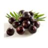 Acai berry (Euterpe oleracea)